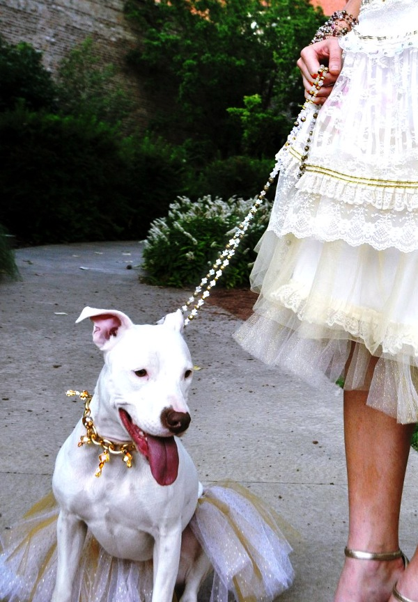 Canine Couture tutu and crystal collar and leash! Fully customizable to match your best couture concept! Glamazon pup or sofisticated hound, the choice is yours!
